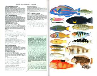 Marine fishes of tropical Australia and south-east Asia.