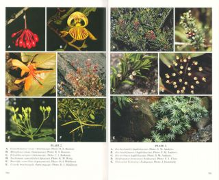 The plants of Mount Kinabalu, Volume 4: Dicotyledon families Acanthaceae to Lythraceae.