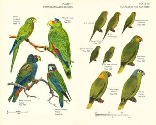 Birds of Guatemala.
