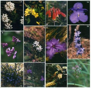 Sydney flora: a beginner's guide to Australian native plants.