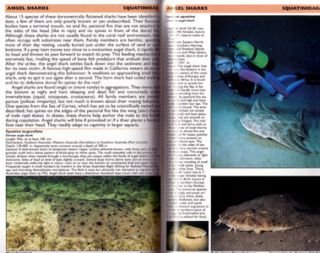Sharks and rays: Elasmobranch guide of the world.