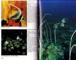 Indian Ocean reef guide: Maldives, Sri Lanka, Thailand, South Africa, Mauritius, Madagascar, East Africa, Seychelles.