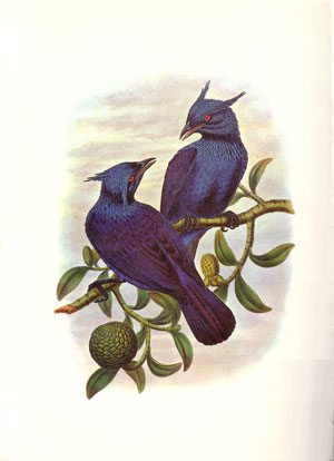 Birds of New Guinea: illustrations from the lithographs of John Gould.
