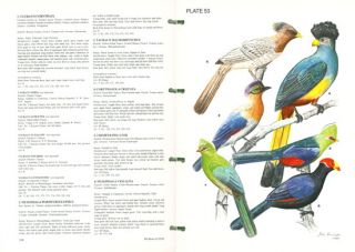 The birds of CITES and how to identify them.