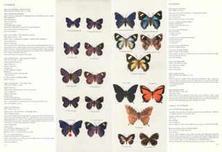Butterflies of the Australian region.