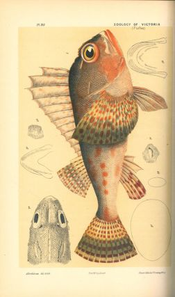 Natural history of Victoria. Prodromus of the zoology of Victoria; or, figures and descriptions of the living species of all classes of the Victorian indigenous animals.