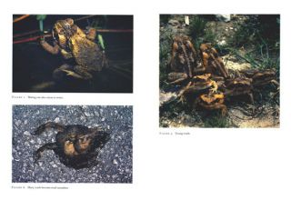 The Cane Toad: the history and ecology of a successful colonist.