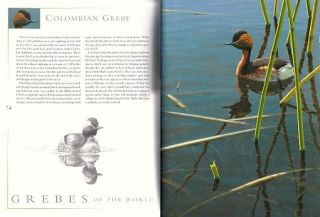 Grebes of the world.