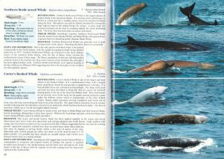Whales and dolphins of the European Atlantic, the Bay of Biscay and the English Channel.