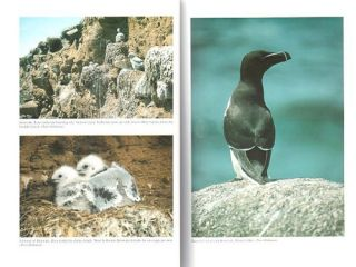 The birds of the Isles of Scilly.