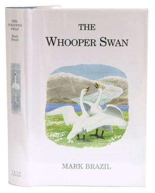The Whooper Swan. Mark Brazil