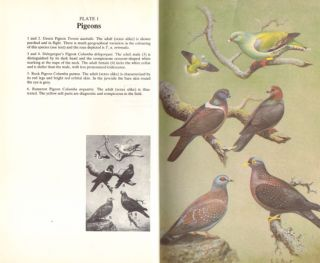 The doves, parrots, louries and cuckoos of Southern Africa.