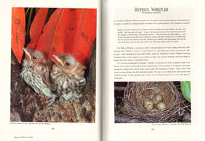 The robins and flycatchers of Australia.