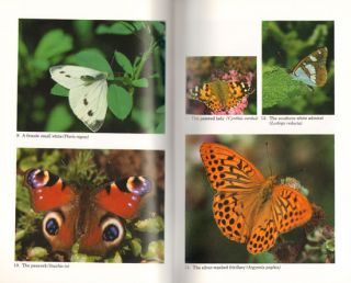 The natural history of butterflies.