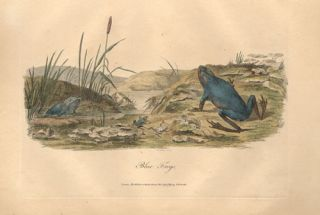 Journal of a voyage to New South Wales [reptile plates only].