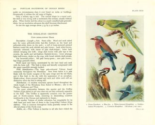 Popular handbook of Indian birds.