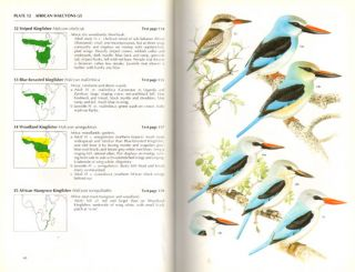 Kingfishers, bee-eaters and rollers: a handbook.