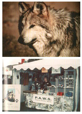 The return of the Mexican Gray Wolf: back to the blue.
