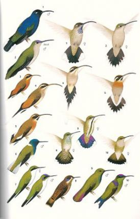 Birds of Belize.