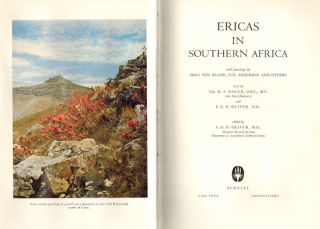 Ericas in Southern Africa.