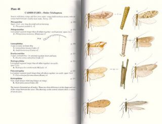 A field guide to the insects of Britain and northern Europe.