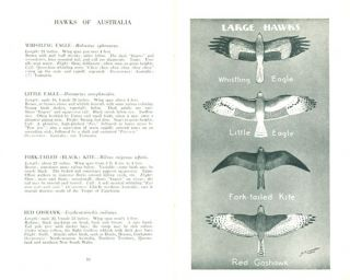 Field guide to the hawks of Australia.