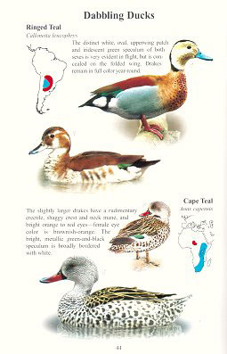 Handbook of waterfowl identification.
