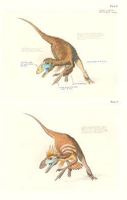 Feathered dragons: studies on the transition from dinosaurs to birds.