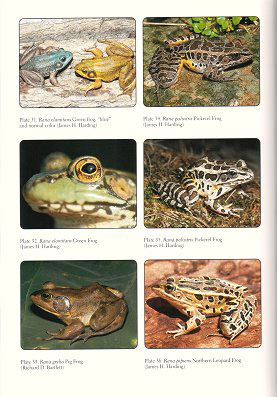 Fossil frogs and toads of North America.