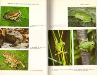 The care of reptiles and amphibians in captivity.
