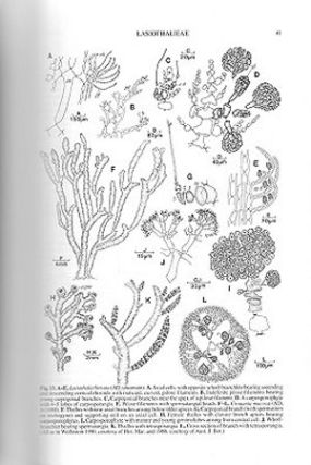 The marine benthic flora of southern Australia, Rhodophyta, part three C: Ceramiales - Ceremiaceae, Dasyaceae.