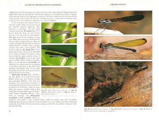 A guide to the dragonflies of Borneo: their identification and biology.