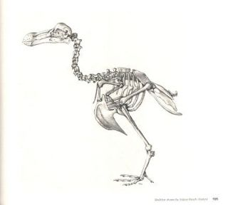 The Dodo: the bird that drew the short straw.