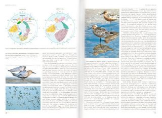 Shorebirds: an illustrated behavioural ecology.