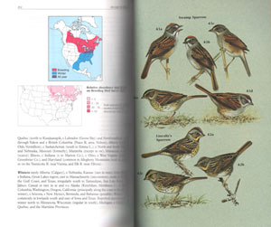 A guide to the identification and natural history of the sparrows of the United States and Canada.