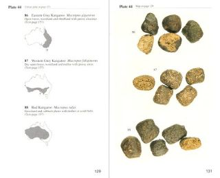 Tracks, scats and other traces: a field guide to Australian mammals.
