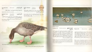 Birds of Madinat Yanbu Al-Sinaiyah and its hinterland.