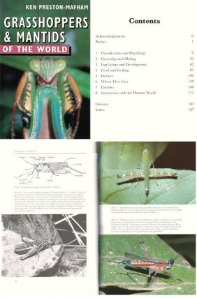 Grasshoppers and mantids of the world..