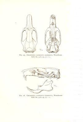 The families and genera of living rodents. With a list of named forms (1758-1936) by R. W. Hayman and G. W. C. Holt. volume two: Family Muridae.