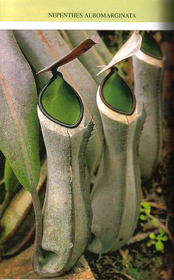 A pocket guide: Pitcher plants of Sarawak.