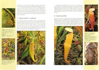 A guide to the pitcher plants of Peninsular Malaysia.