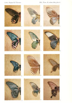 The genetics of the mimetic butterfly Papilio memnon.
