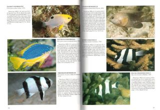 Fishes of the Great Barrier Reef and Coral Sea.