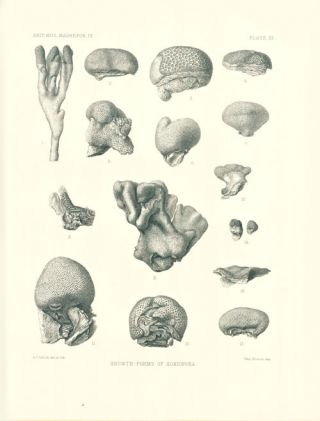 Catalogue of the Madreporian corals in the British Museum (Natural History).