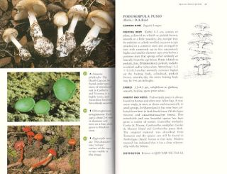 A field guide to the fungi of Australia.