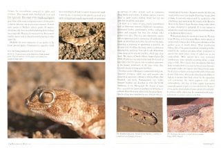 Remarkable reptiles of South Africa.