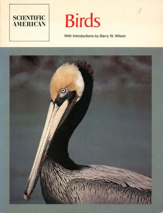 Birds: readings from Scientific American. Barry W. Wilson