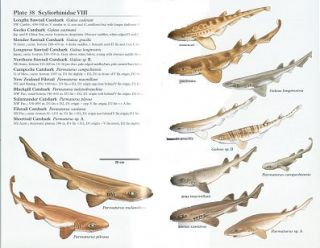 Sharks of the world: Collins field guide.