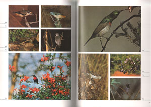 The dictionary of birds in colour.