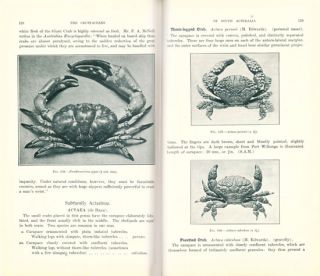 The crustaceans of South Australia.